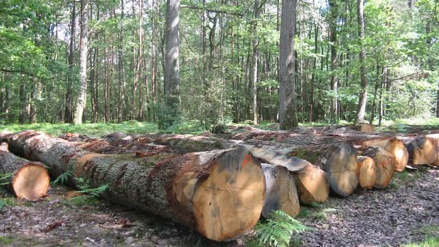Autour de la forêt de la Guerche