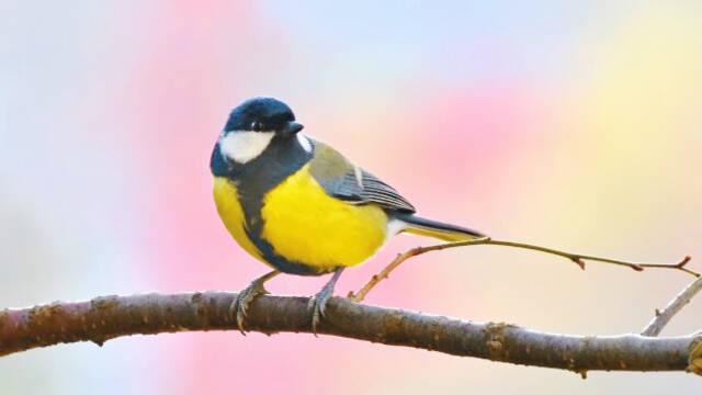 J'ai observé les oiseaux : à Coussay-les-Bois 1/2