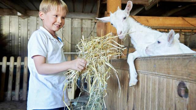 Mes vacances à la ferme
