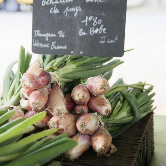 L'échalion ou cuisse de poulet du Poitou