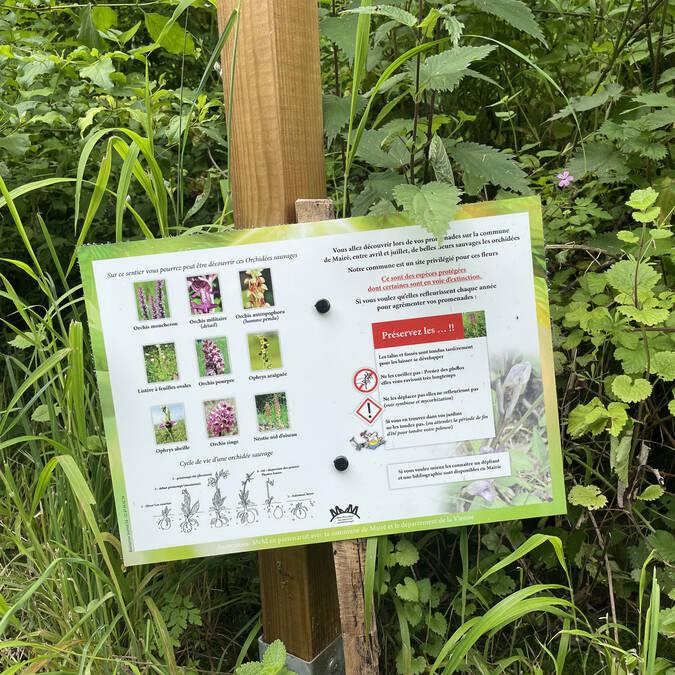 Sur le chemin des orchidées sauvages à Mairé